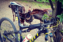 Bike_9_albergo_al_sole